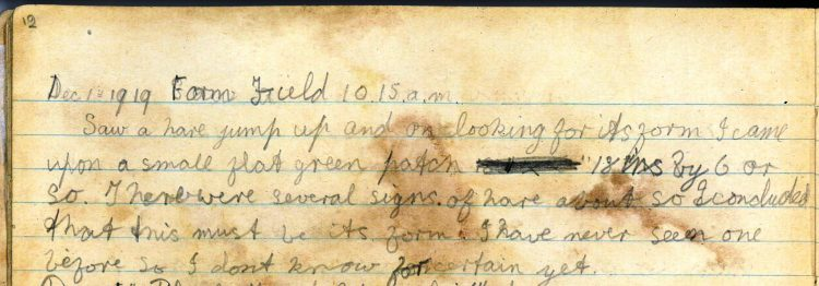 PD100, Viola Stirling's nature diary, 1 Dec 1919. Reproduced with permission of Gargunnock Estate Trust