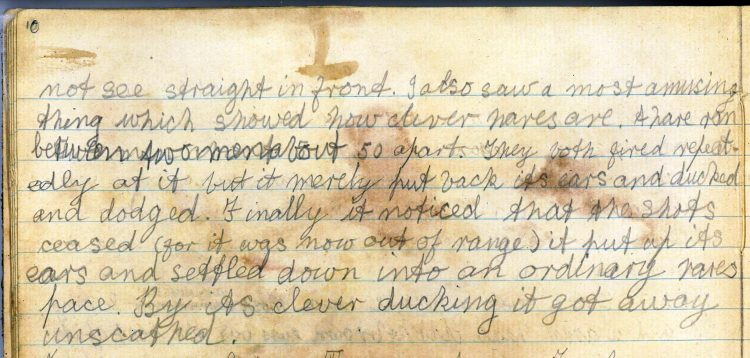 PD100, Viola Stirling's nature diary, 6 Nov 1919. Reproduced with permission of Gargunnock Estate Trust