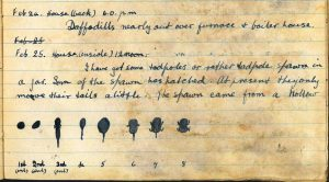 Diary entry for 24th and 25th February 1921 page 1