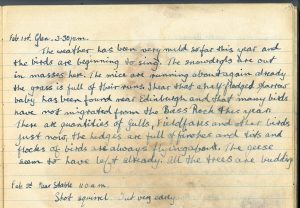 PD100, Viola Stirling's nature diary, 23 Nov 1919. Reproduced with permission of Gargunnock Estate Trust